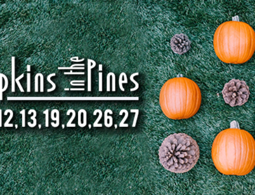Pumpkins in the Pines 2019